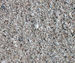 Landscape Shell Supplies Davis Concrete Florida
